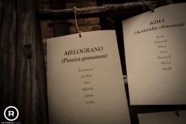 campdicent-pertigh-caratebrianza-matrimonio-foto-reportage-46